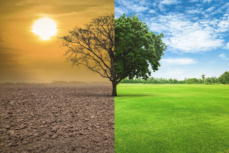 dustry dry vs healthy tree